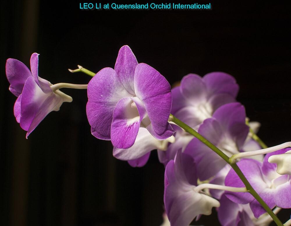 LEO LI with QOI (1)