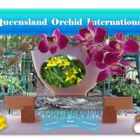 Charlie Robino: Loving Orchids in Far North Queensland 🌼🏡🎣🌊☀