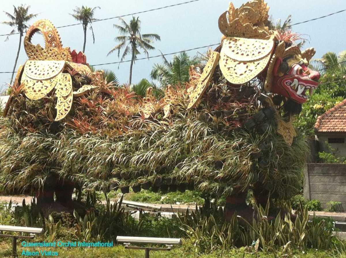 Bromeliad Dragon (2)