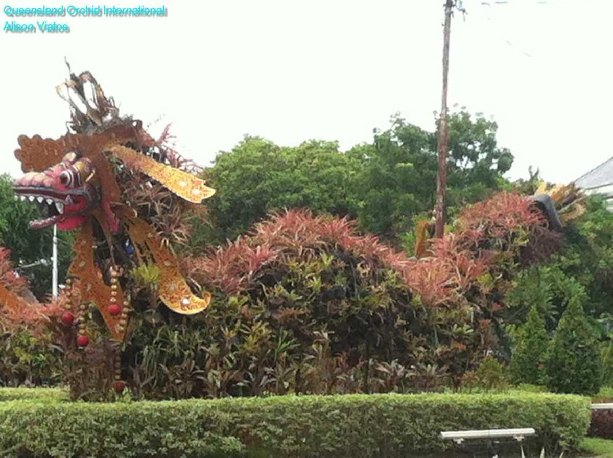 Bromeliad Dragon (5)