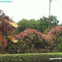 Bromeliad Dragon (5)