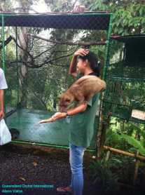 Luwak Coffee Production at Bali (1)