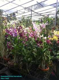 Orchid Nursery at Sanur, Bali (11)