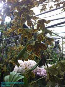 Orchid Nursery at Sanur, Bali (13)