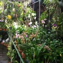 Orchid Nursery at Sanur, Bali (17)