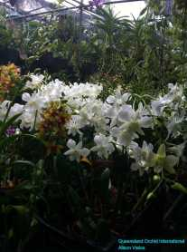 Orchid Nursery at Sanur, Bali (19)