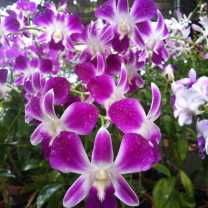 Orchid Nursery at Sanur, Bali (2)