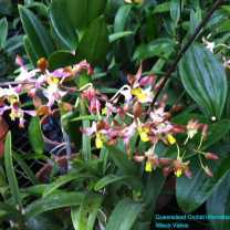 Orchid Nursery at Sanur, Bali (21)