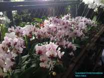 Orchid Nursery at Sanur, Bali (22)