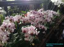 Orchid Nursery at Sanur, Bali (22)