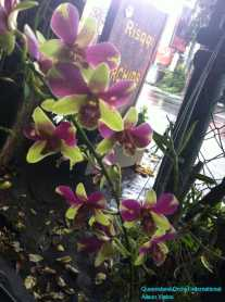 Orchid Nursery at Sanur, Bali (23)