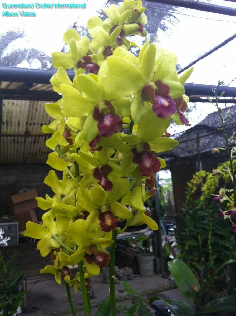Orchid Nursery at Sanur, Bali (5)