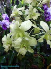 Orchid Nursery at Sanur, Bali (6)