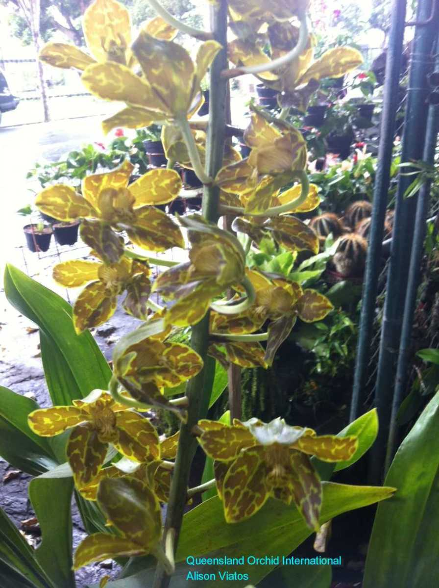 Orchid Nursery at Sanur, Bali (9)