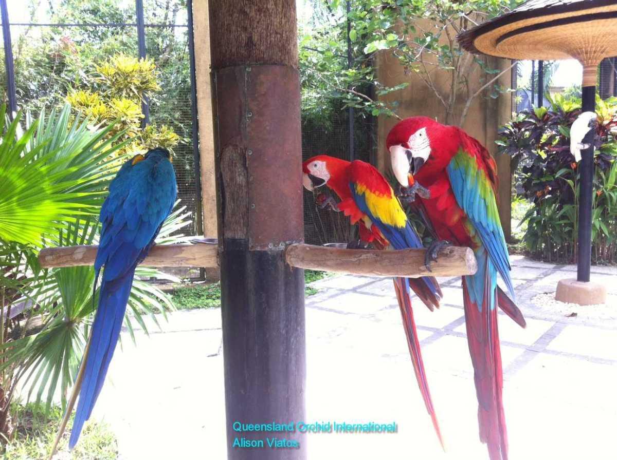 Parrots at the Bird Park
