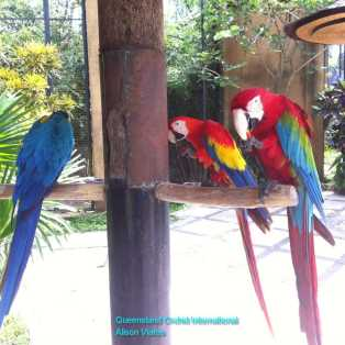 Parrots at the Bird Park