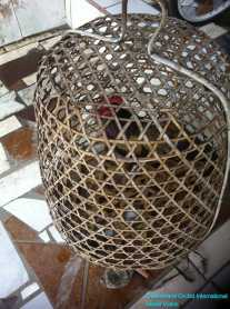 Rooster in Cage for Cock Fighting (a popular male hobby)