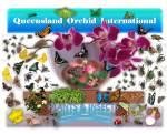 Queensland Orchid International Plants & Insects