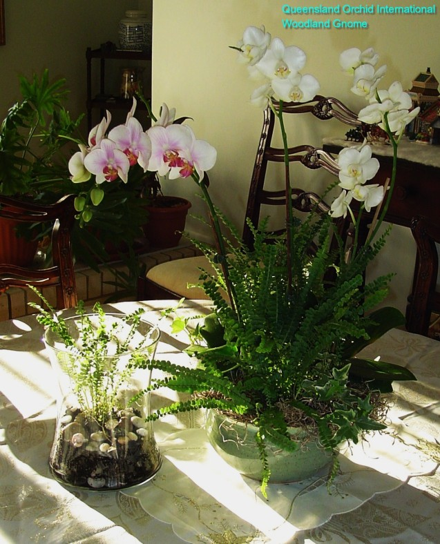 Phalaenopsis-arrangement-002