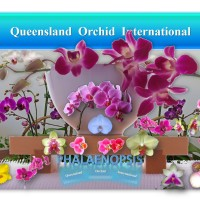 Phalaenopsis: Novice's Orchid, Mother's Day Gift and woodlandgnome's House Plant ✾💃🎁🏡
