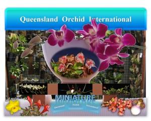 Queensland Orchid International Miniature