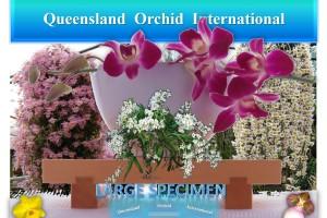Queensland Orchid International Large Specimen